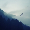 eagle-flying-silhouette-wallpaper-2