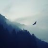 eagle-flying-silhouette-wallpaper-2
