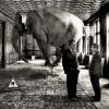 elephant-framed